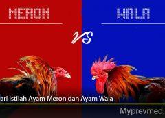 Arti Dari Istilah Ayam Meron dan Ayam Wala