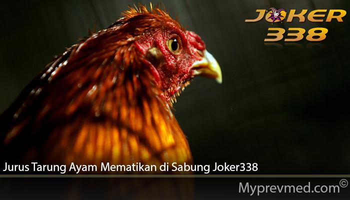 Jurus Tarung Ayam Mematikan di Sabung Joker338