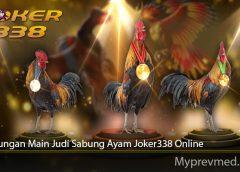 Keuntungan Main Judi Sabung Ayam Joker338 Online